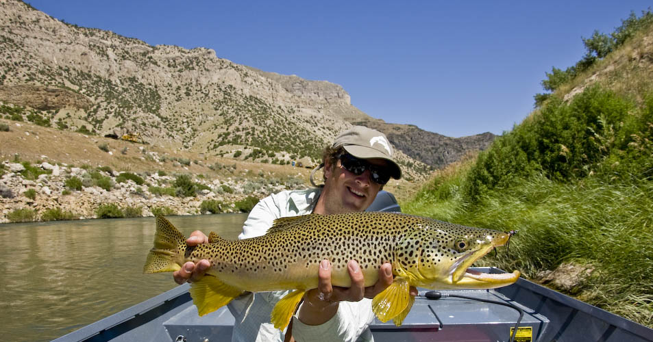 big wyoming brown