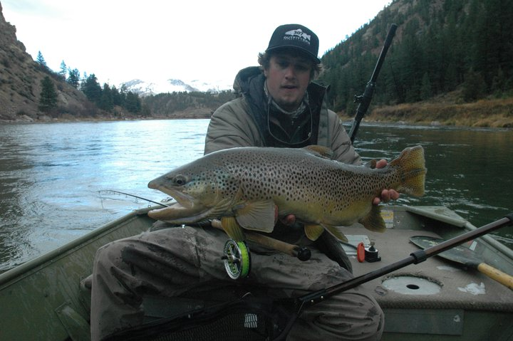 big browns on the Land of Giants