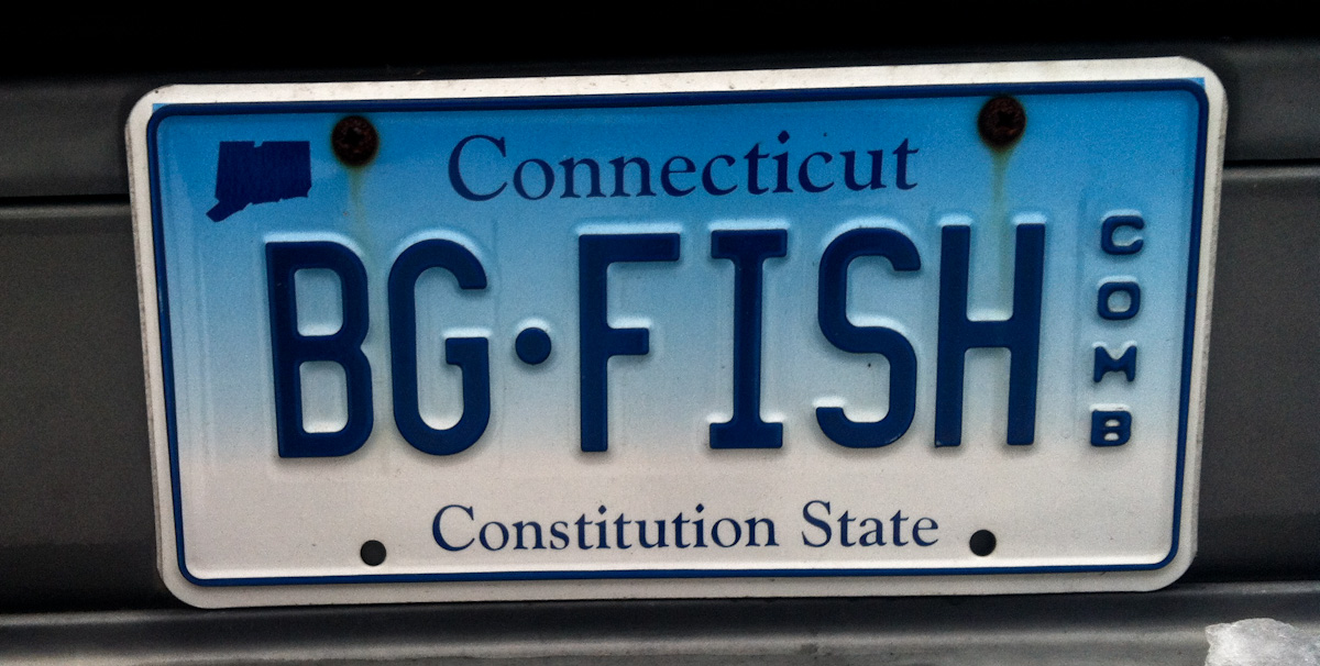 even in CT fish-heads are everywhere